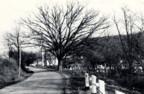 Historical photo by Matt Hamel shows an old oak tree just behind the marker.
